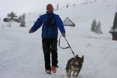 Szkolenie psów lawinowych na Hali Gąsienicowej w Tatrach