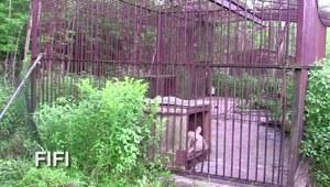 Szokująca metamorfoza uratowanego niedźwiedzia