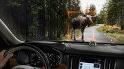 Sztuczna inteligencja? Zobacz, co potrafią samochody