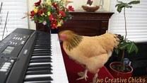 Ta kura jest bardzo utalentowana muzycznie
