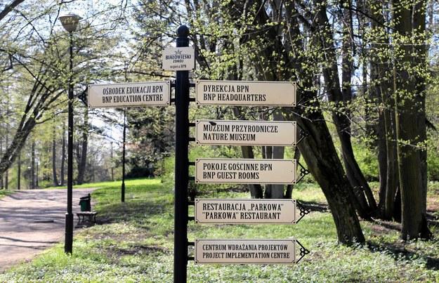 Tabliczki informacyjne w Białowieskim Parku Narodowym/fot. Agnieszka Sadowska /&nbsp