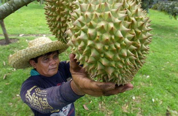 Tajlandczycy zbierają owoce z drzew, Malezyjczycy zazwyczaj czekają, aż same spadną /AFP
