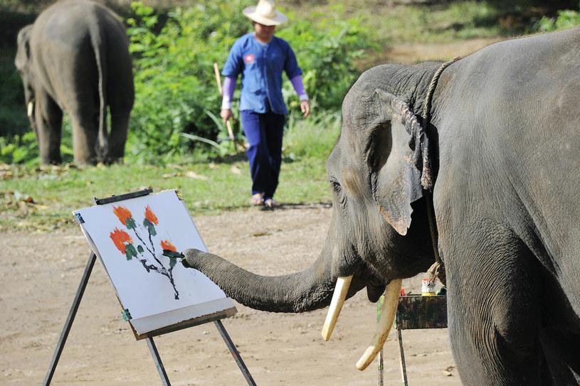 Tajskie słonie znają różne sztuczki /AFP