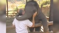 Tak wygląda przyjaźń ze słoniem. Urocze