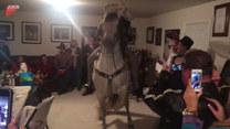 Tańczący koń na środku salonu. Przesada?
