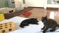 Te koty nie potrafią usiedzieć w miejscu