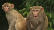 Te małpy to najwredniejsze zwierzęta świata!