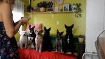 Te psy potrafią jeść w określonej kolejności