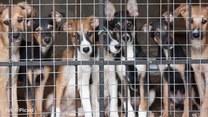 Te psy przeżyły piekło! Możesz im pomóc!