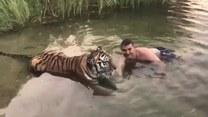 Temu mężczyźnie zebrało się na czułości z tygrysem. Czy uszedł z życiem?