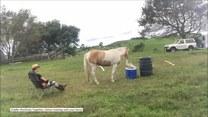 Ten koń jest bardzo uprzejmy - przynosi swojemu właścicielowi wodę