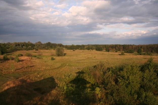 Ten las na horyzoncie to już Ukraina. A może Białoruś? /INTERIA.PL