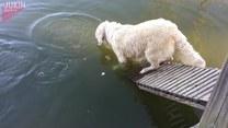 Ten pies jest mistrzem... łowienia ryb