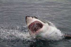 Ten strój ochroni przed atakiem rekinów