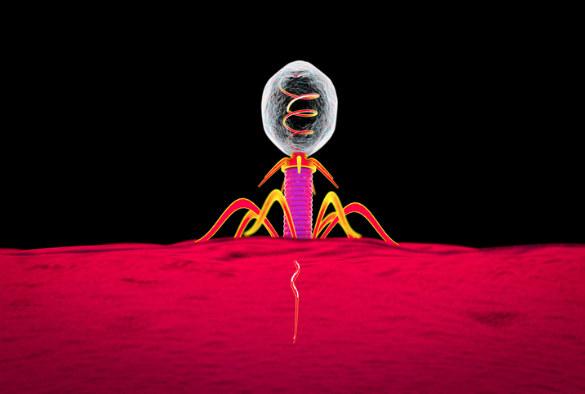 Terapia z użyciem fagów może skutecznie zwalczać zapalenie płuc /materiały prasowe