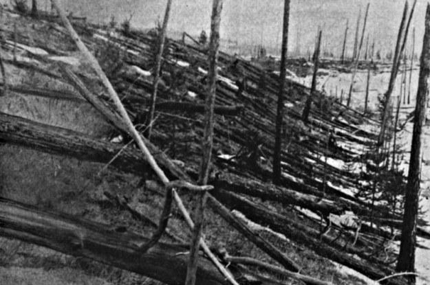 Teren zniszczony przez katastrofę tunguską był ogromny /Wikipedia
