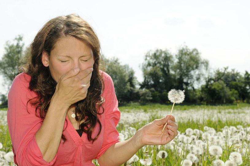Testy alergiczne można przeprowadzić dopiero jesienią. Jednak zanim je zrobisz, możesz złagodzić dokuczliwe objawy lekami /© Panthermedia