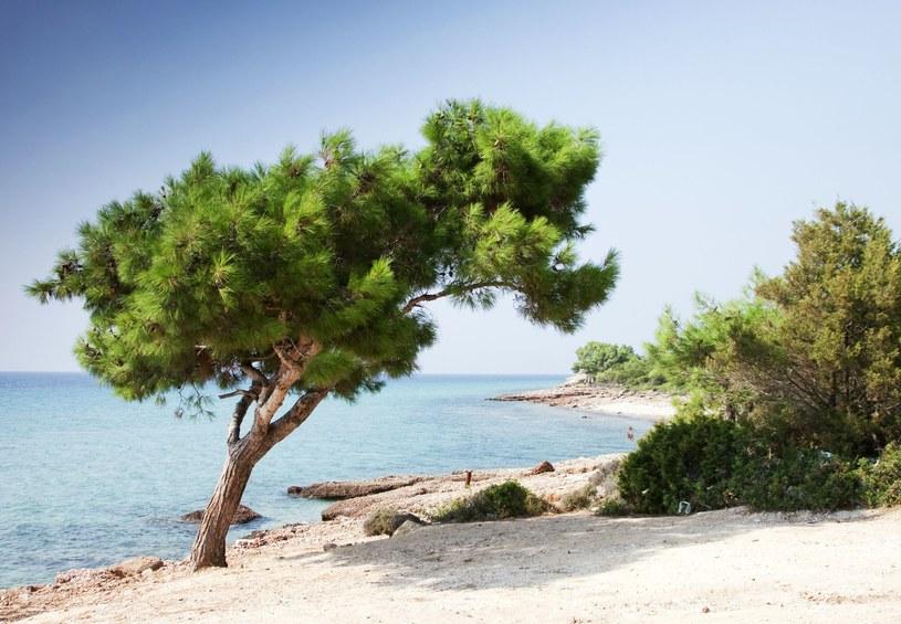 Thassos słynie z pięknych plaż /123/RF PICSEL