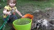 To dziecko przejęło nawyki od świnki