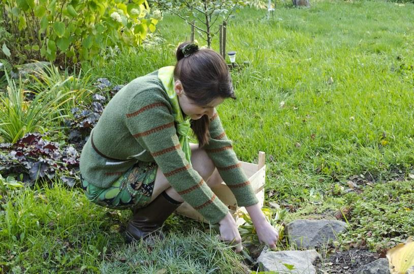 To musisz wiedzieć zakładając ogród skalny. /123RF/PICSEL