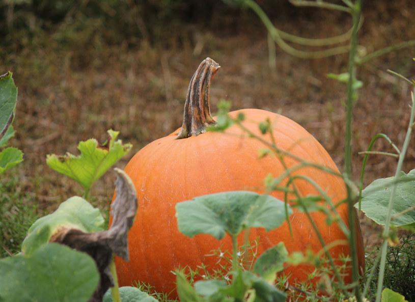 To ona króluje jesienią! /123RF/PICSEL