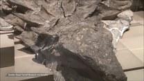 To prawdopodobnie najlepiej zachowane szczątki dinozaura