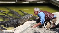 To się nazywa odwaga! Ten śmiałek karmi aligatory parówką… prosto z ust