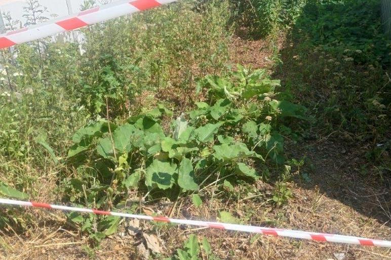 To ten krzew poparzył chłopca na Wildzie. /Straż Miejska w Poznaniu /
