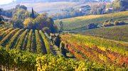 Toskania. Najpiękniejsza pod słońcem kraina na wakacje