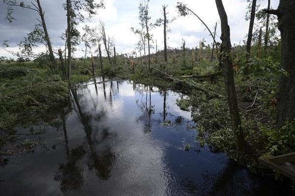 Usuwanie zniszczeń w Borach Tucholskich, skutków trąby powietrznej, która 14 lipca przeszła nad województwem kujawsko-pomorskim / fot. Tytus Żmijewski