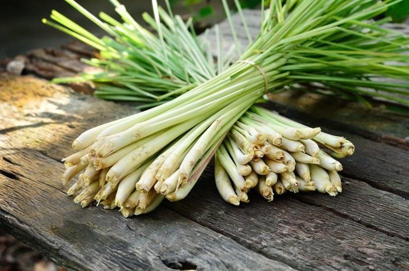 Trawa cytrynowa to jedna z podstawowych przypraw kuchni tajskiej /123RF/PICSEL