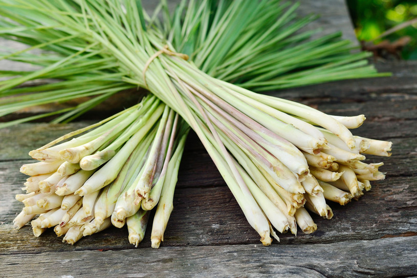 Trawa cytrynowa to również doskonały dodatek do potraw /©123RF/PICSEL