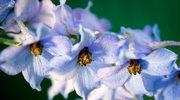 Trujące kwiaty w ogrodzie