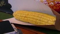 Trwa sezon na złocistą kukurydzę. Jakie są jej właściwości?