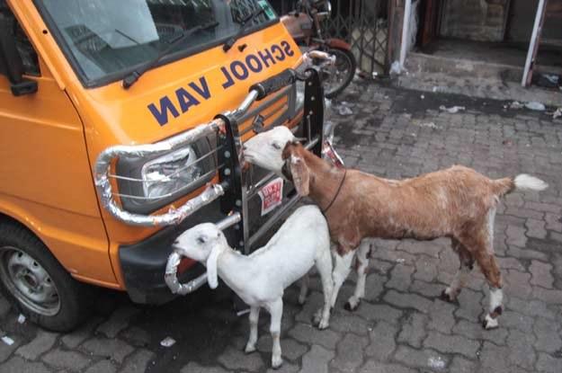 Trzeba uważać na zwierzęta! /INTERIA.PL