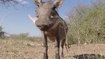 Twarzą w twarz z dzikimi zwierzętami
