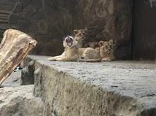 TWOJE NIESAMOWITE MIEJSCELwiarnia w ogrodzie zoologicznym w Gdańsku