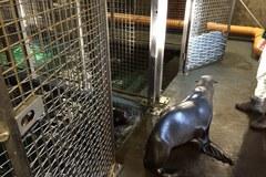 Twoje niezwykłe miejsce: zakamarki Afrykarium w ogrodzie zoologicznym we Wrocławiu