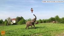 Tworzy zgrany duet ze... słoniem. Niesamowite