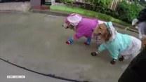 Tym psiakom niestraszna deszczowa pogoda