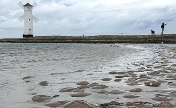 Tysiące meduz na plaży w Świnoujściu. To oznaka końca lata