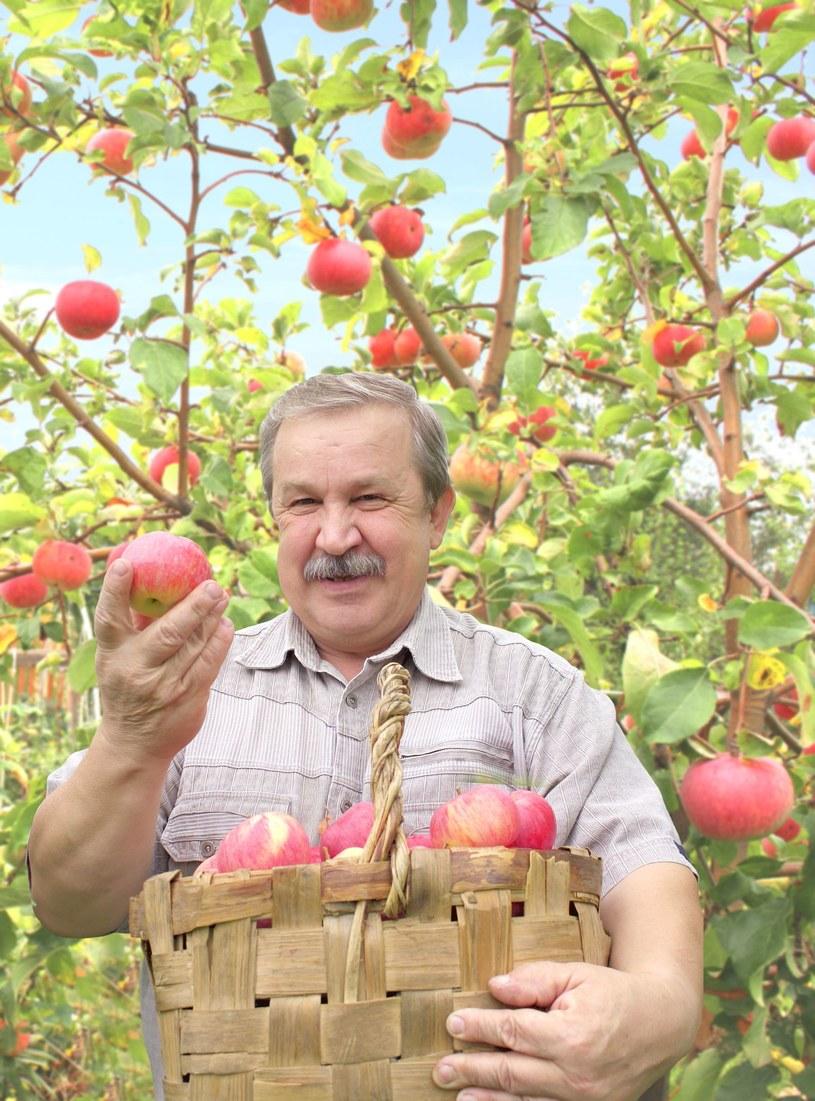 """""""Udział Rosji w naszym eksporcie to wprawdzie zaledwie 7 proc., ale w przypadku niektórych towarów jest on dominujący, np. w przypadku jabłek to 60 proc."""" /123RF/PICSEL"""