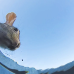 Ukrył kamerę w wiadrze z wodą. Te zwierzaki wpadły się z niego napić!