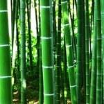 Ulepszona bambusowa garderoba
