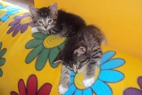ulubione miejsce kotów do spania-oparcie sofy w salonie