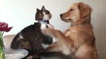 Ulubione zajęcie tego psa i kota to... bójki