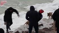 Uratowali psa! Wyjątkowa akcja w lodowatej wodzie