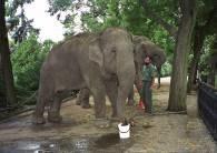 Uratowane słonie /RMF24.pl