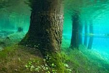 USA: Odkryty podwodny las