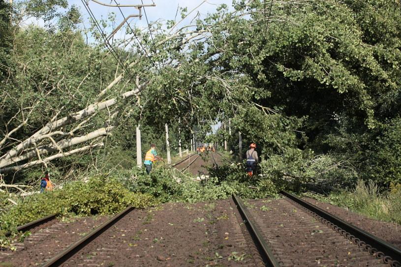 Usuwanie drzew powalonych na trasę kolejową w okolicach Bierzwnika /Lech Muszyński /PAP